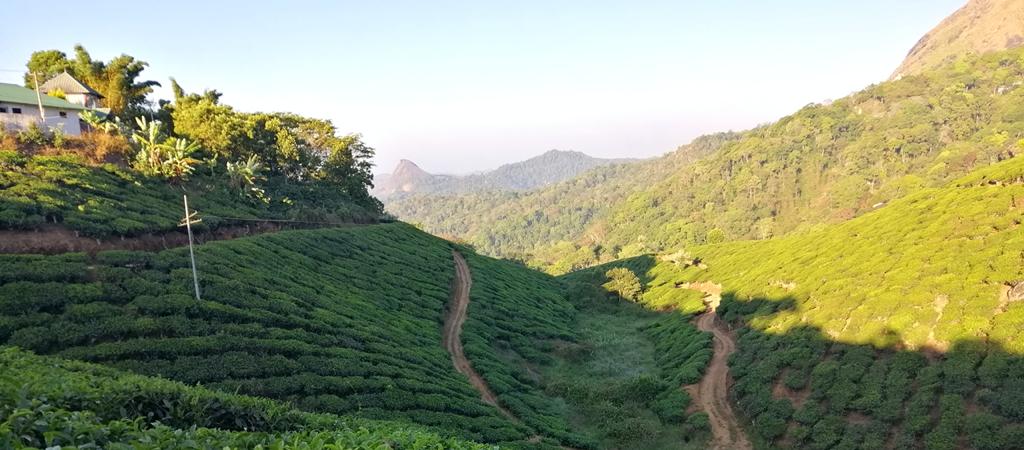 munnar india tea plantations sunrise